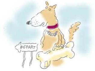 Pet Travel Scheme Update 2012