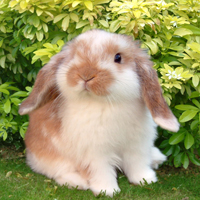 10% Off Rabbit Vaccinations