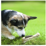 Dog sniffs Bone