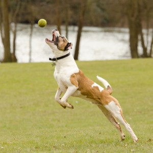 Eddie Jumping