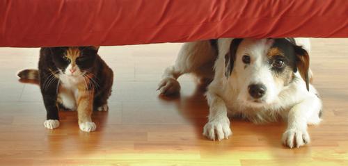 Dog & Cat under sofa