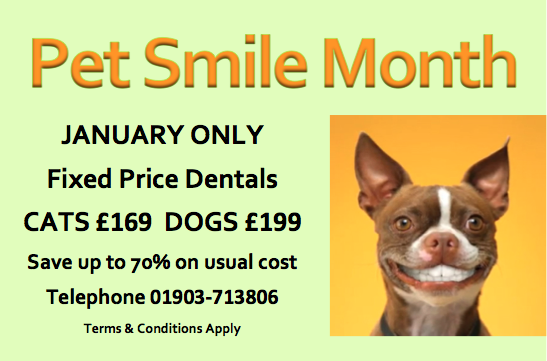 Dental Offer Jan 2014