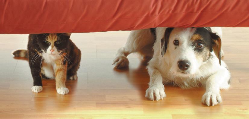 Dog & Cat under sofa 2