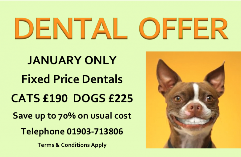 DENTAL OFFER JAN 2015