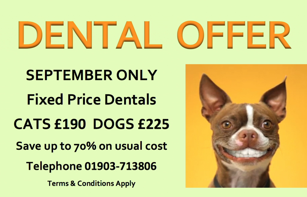 Sept 16 DENTAL OFFER