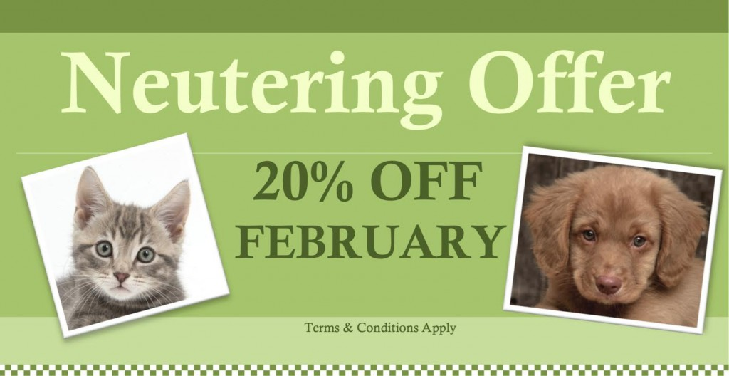 February Offer 2017 - Neutering