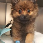 Pet of the month - Prince - March 2017
