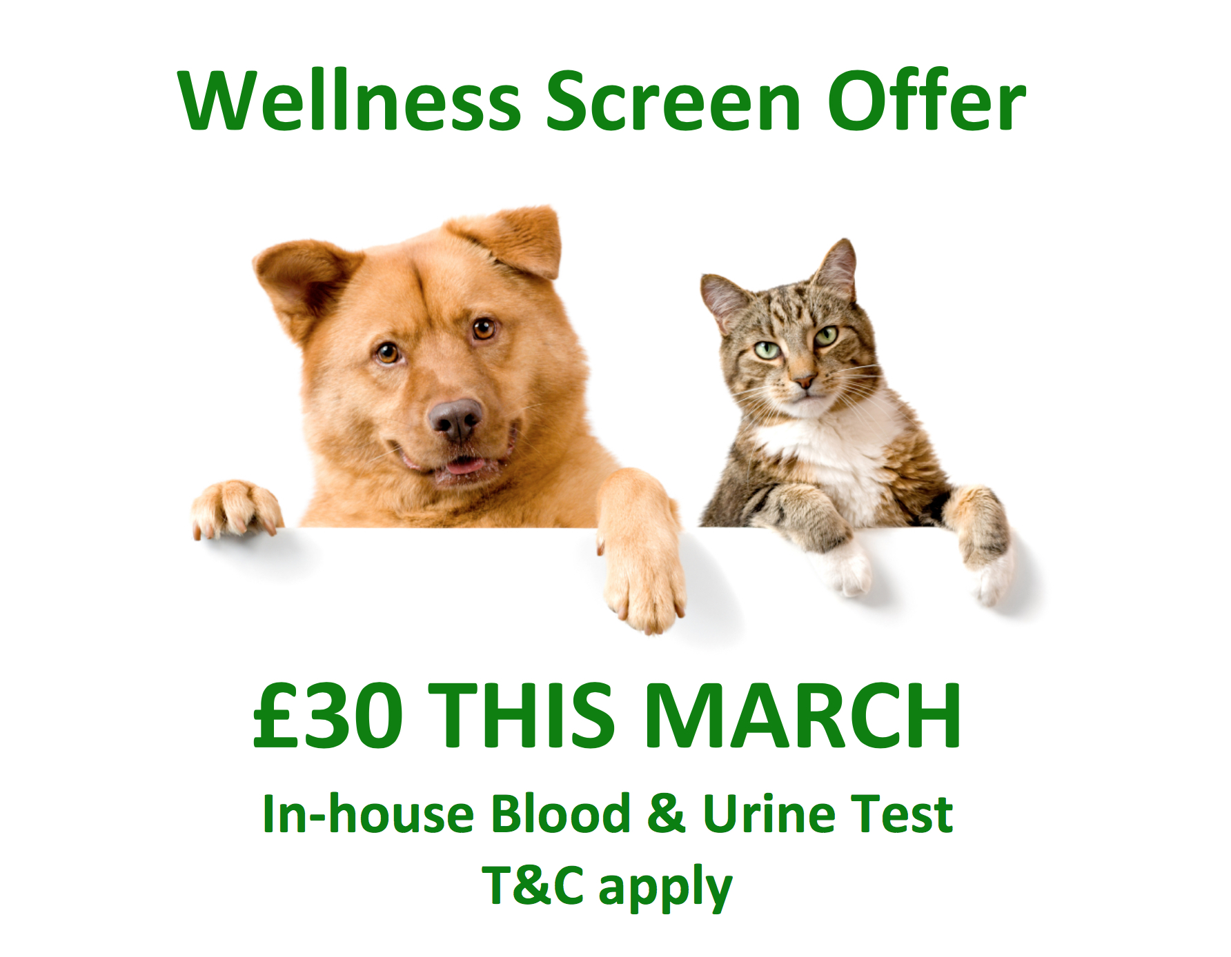 Wellness Screen Offer