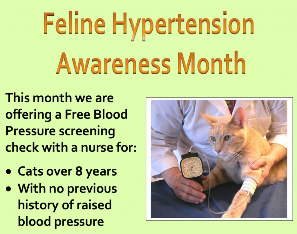 Feline Hypertension month (1)