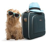 Dog & Pet travel
