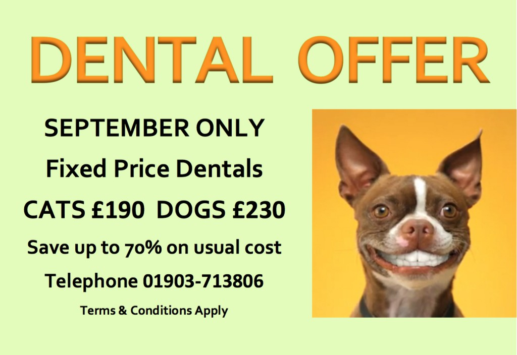 Pet Smile Month Dental Offer