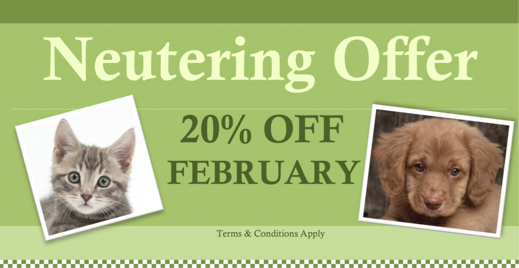 Feb Neutering Offer