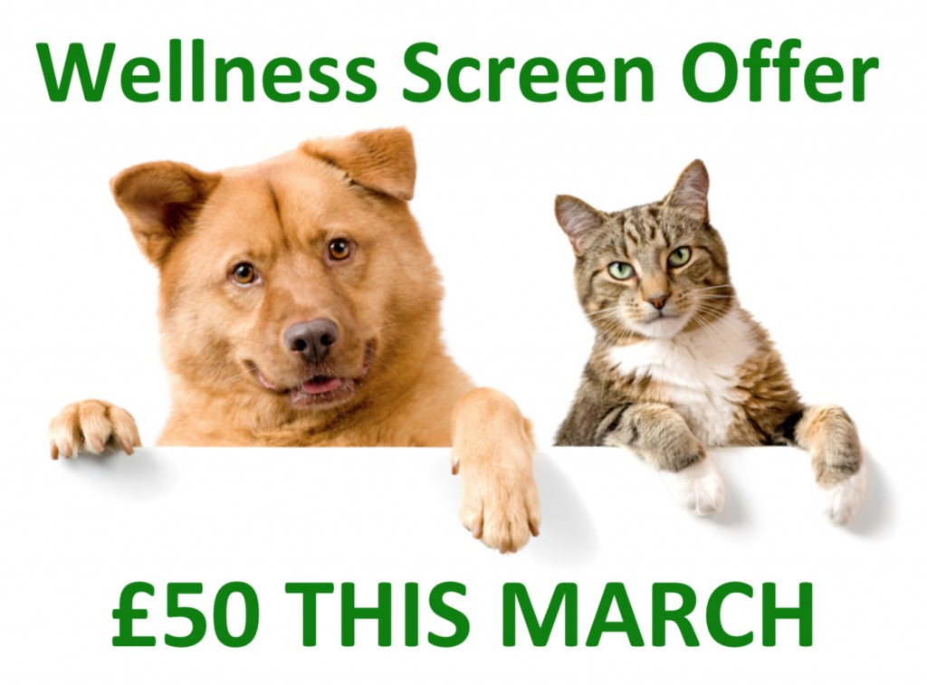 Wellness screen Mar 2019