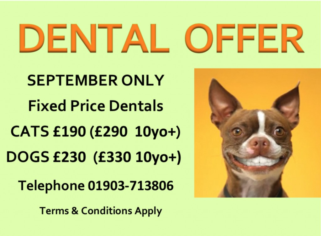 Dental Offer Sep 19