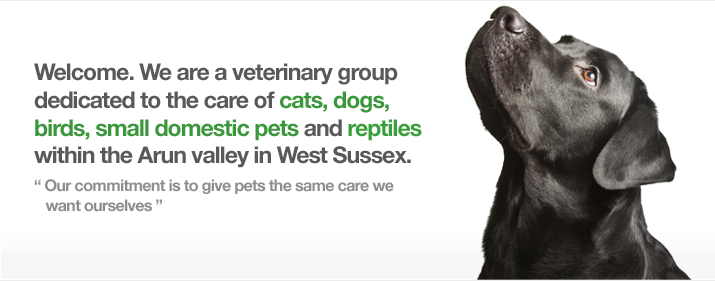 Welcome. We are a veterinary group dedicated to the care of cats, dogs, birds, small domestic pets and reptiles within the Arun valley in West Sussex
